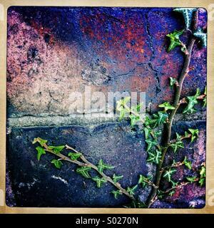 Ivy on brick wall - Stock Photo