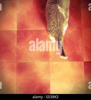 Cat walking on tiled floor property released - Stock Photo