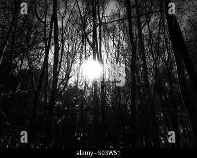 sunlight through trees black - photo #39