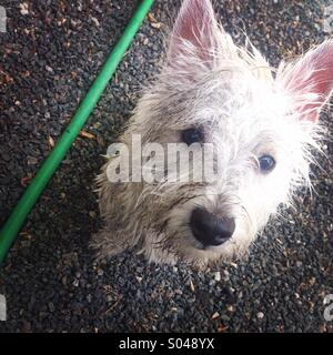 Dog days of summer - Stock Photo