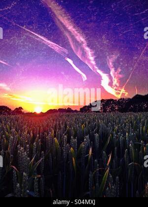 Sunset over wheat field - Stock Photo