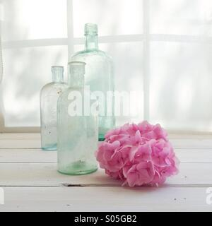 Vintage glass bottles with pink hydrangea on window sill bathed with light - Stock Photo