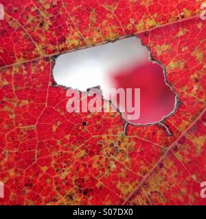 Leaf close up with natural heart shape - Stock Photo