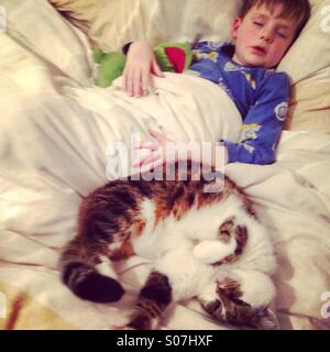 Sleeping boy and cat. - Stock Photo