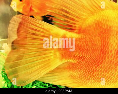 Fish tales - or Fish Tails! - Stock Photo