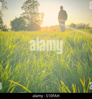 Golden hour walk in an English meadow. Taken from ground level with a silhouette of a man in the background. - Stock Photo