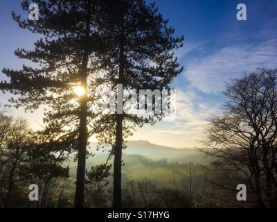 Pine trees silhouetted against a winter sky on High Tor in Matlock Bath in Derbyshire Peak District England UK - Stockfoto