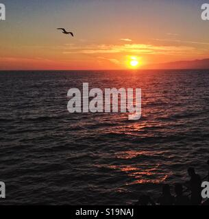 Seagull flying in front of sunset over ocean - Stock Photo