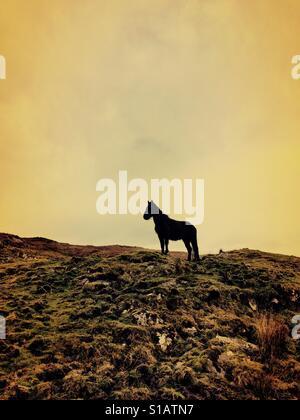 Horse in silhouette in landscape - Stockfoto