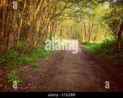 Evening walk through the woods at Oakamoor, Staffordshire, England, UK - Stock Photo