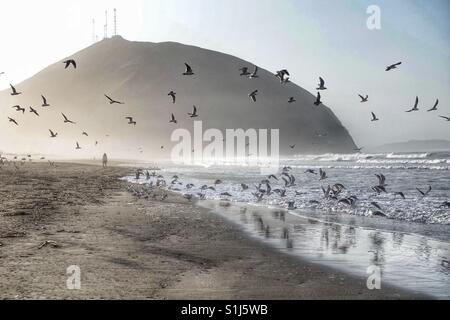 Birds flying over the shore at San Antonio beach in Lima Peru - Stock Photo
