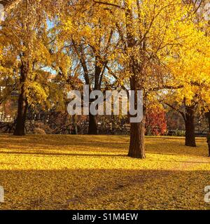 The golden hour is every hour when the sun hits these leaves. - Stock Photo