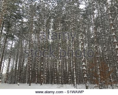 Snowy forest in NY, USA. - Stock Photo