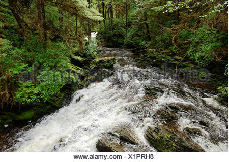 Mountain stream, Revillagigedo Island, Ketchikan, Alaska, USA - Stock Photo