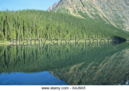 reflection forest in Cavell Lake Jasper National Park Alberta Canada - Stock Photo