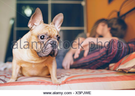 French bulldog sitting on the bed at home while young couple kissing in the background - Stock Photo
