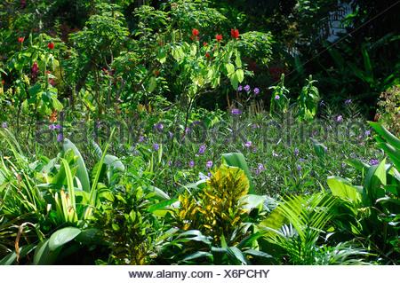 Caribbean Port Antonio Jamaica Garden Mockingbird Hill Hotel North Coast Green Flowers Flowering Plants Tropics Tropical Nature - Stock Photo