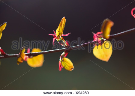 Portland, Oregon, United States Of America; Small Flowers On A Tree Branch - Stock Photo