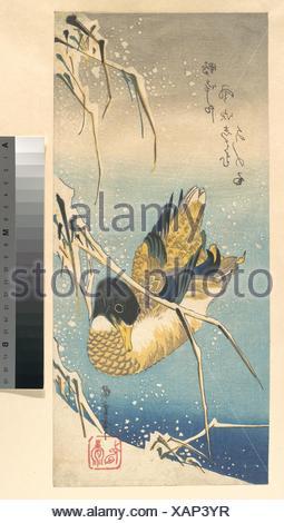 歌川広重画 雪中芦に鴨/Mallard Duck and Snow-covered Reeds. Artist: Utagawa Hiroshige (Japanese, Tokyo (Edo) 1797-1858 Tokyo (Edo)); - Stock Photo