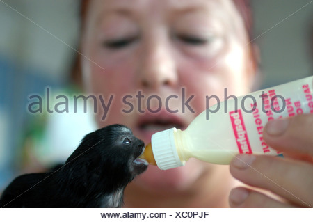 Zoopflegerin child feeding monkeys at the zoo, Berlin - Stock Photo