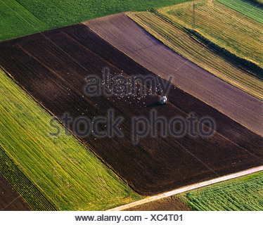 farm machine with flock of gulls during field work, Germany, Bavaria, Achselschwang - Stock Photo