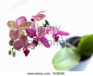 Close up of orchid flower petals - Stock Photo