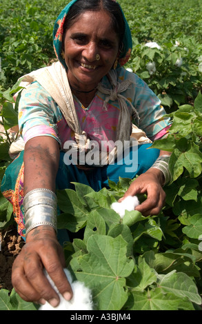 Bauer in Guajarat Indien wächst Baumwolle, die sie unter das Fairtrade-System, Marks and Spencer verkauft - Stockfoto