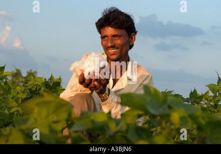 Bauer in Guajarat Indien wächst Baumwolle, die er unter das Fairtrade-System, Marks and Spencer verkauft - Stockfoto