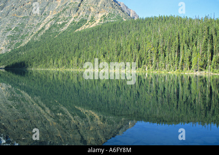 Spiegelung Wald in Cavell Lake Jasper Nationalpark Alberta Kanada - Stockfoto