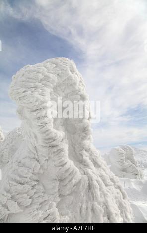 Schnee-Monster - Bäume mit Schnee im Winter Mount Verwaltungssitz Japan auf sie gefroren - Stockfoto