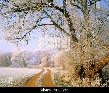 GB - GLOUCESTERSHIRE: Winter-Szene in den Cotswolds - Stockfoto