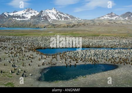 antarktis south georgia island k nig pinguin aptenodytes. Black Bedroom Furniture Sets. Home Design Ideas
