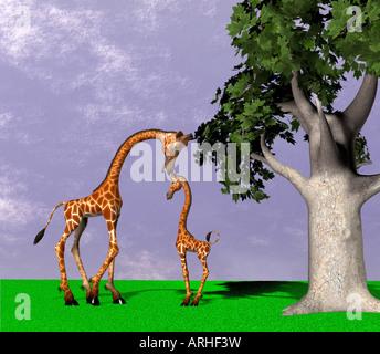 Giraffen - Stockfoto