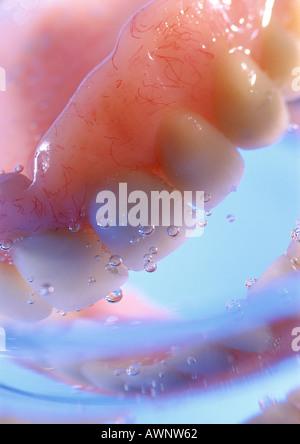 Zahnersatz in Wasser, Nahaufnahme - Stockfoto