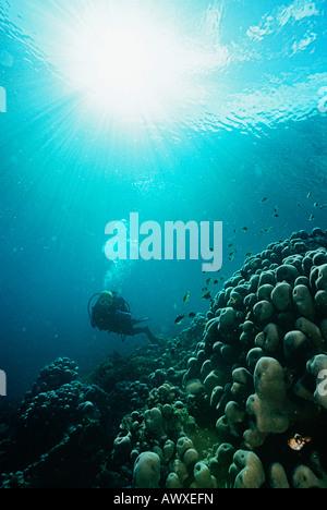 Raja Ampat, Indonesien, Pazifik, Scuba Diver in Untiefen mit Lichtstrahlen streaming von Oberfläche - Stockfoto