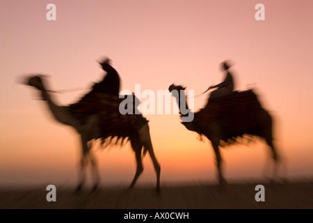 Kamele in der Nähe der Pyramiden von Gizeh, Kairo, Ägypten - Stockfoto