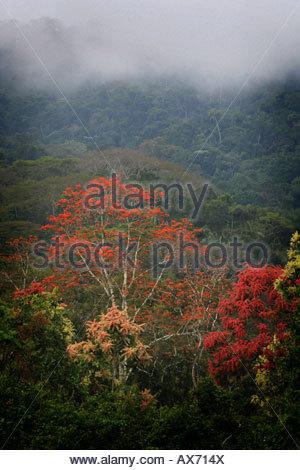 Nebligen Regenwald in der Nähe von Cana Feldstation im Nationalpark Darien, Republik von Panama. - Stockfoto