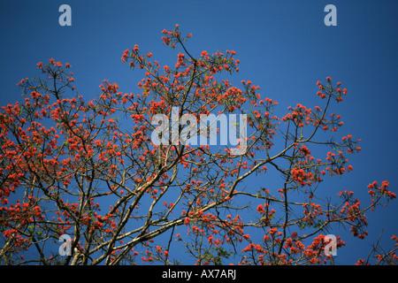 Bunte Blumen auf Baum in Darien National park Republik Panama - Stockfoto