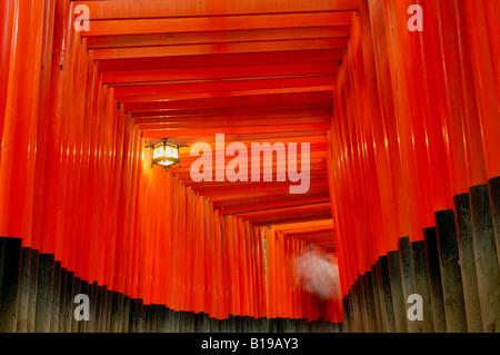Torii-Tore Fushimi Inari-Taisha Schrein Kyoto-Honshu, Japan - Stockfoto