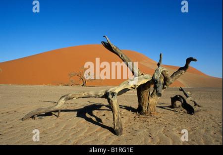 Toter Baum liegend vor Düne 45, Namib-Naukluft-Nationalpark, Namibia, Afrika - Stockfoto