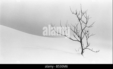 Einsamer Baum steht Uhr über eine Winterlandschaft Hatcher Pass Yunan Alaska - Stockfoto