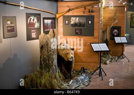 Finnland, Kuhmo, Petola Visitor Center. Informationen über Finnlands größte Fleischfresser und Preditors, wie Bär, - Stockfoto