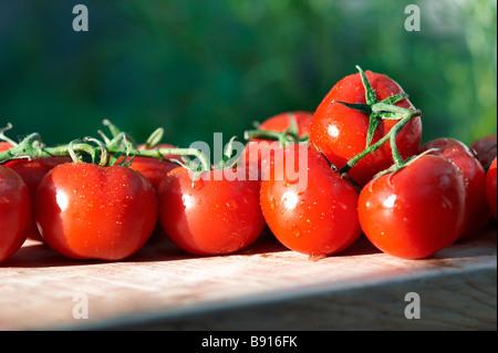 Frische Tomaten - Stockfoto