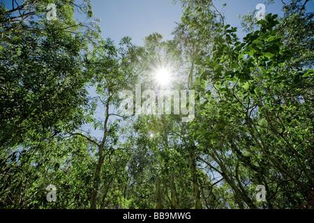 Grünen lebendigen Wald mit Sonne durch die Blätter - Stockfoto