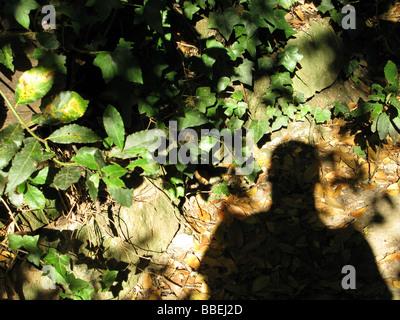 Mannes Schatten im Wald - Stockfoto