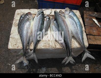 Fisch auf Verkauf in Connemara Markt, Trivandrum, Kerala, Indien - Stockfoto