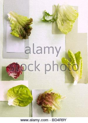 Verschiedene Arten von Salatblättern - Stockfoto