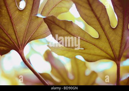schönes Blatt in einem zeitgenössischen Stil Kunstfotografie Jane Ann Butler Fotografie JABP533 - Stockfoto