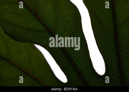 schönes Blatt in einem zeitgenössischen Stil Kunstfotografie Jane Ann Butler Fotografie JABP534 - Stockfoto