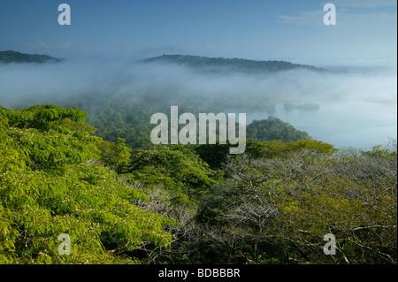 Am frühen Morgennebel in Soberania Nationalpark, Republik von Panama. - Stockfoto